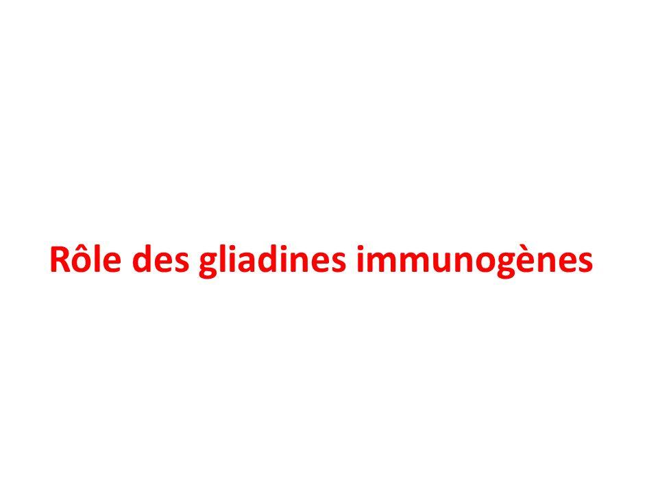 Rôle des gliadines immunogènes