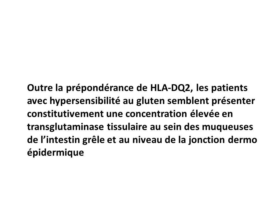 Outre la prépondérance de HLA-DQ2, les patients avec hypersensibilité au gluten semblent présenter constitutivement une concentration élevée en transglutaminase tissulaire au sein des muqueuses de l'intestin grêle et au niveau de la jonction dermo épidermique