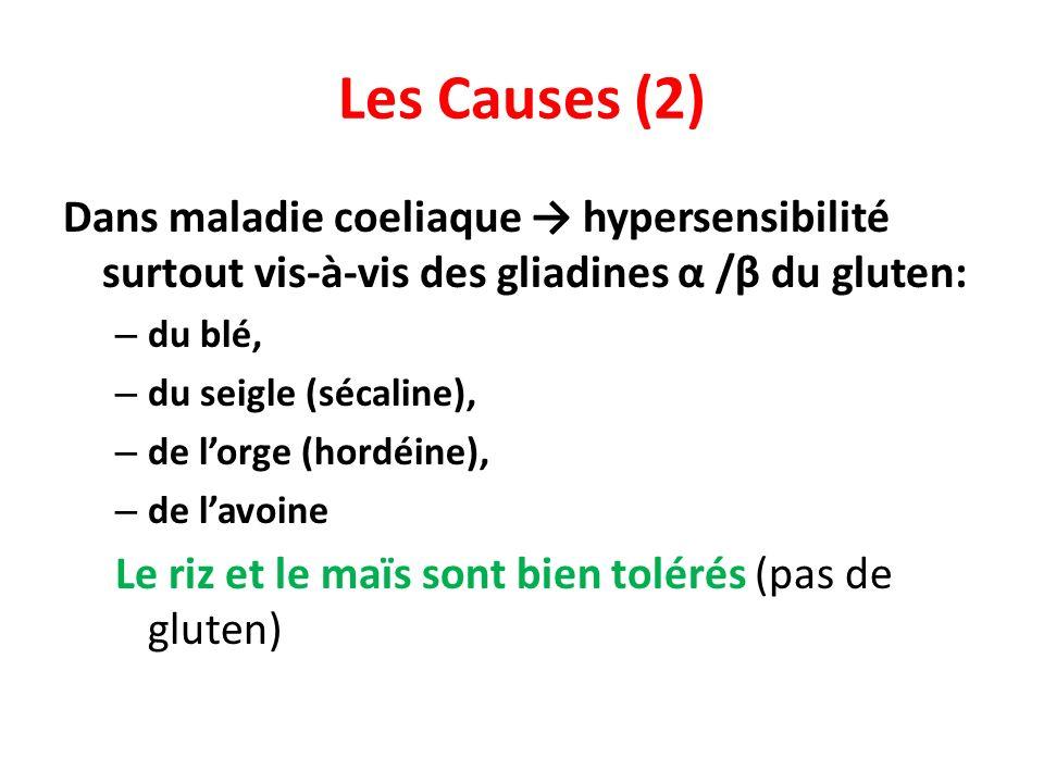 Les Causes (2) Dans maladie coeliaque → hypersensibilité surtout vis-à-vis des gliadines α /β du gluten: