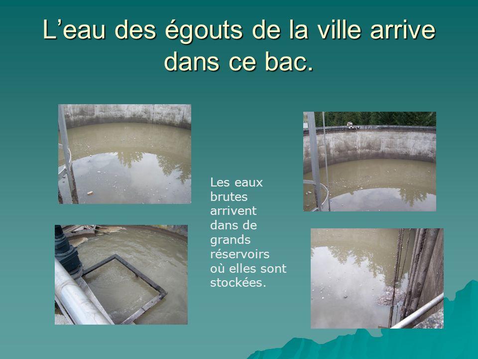 L'eau des égouts de la ville arrive dans ce bac.