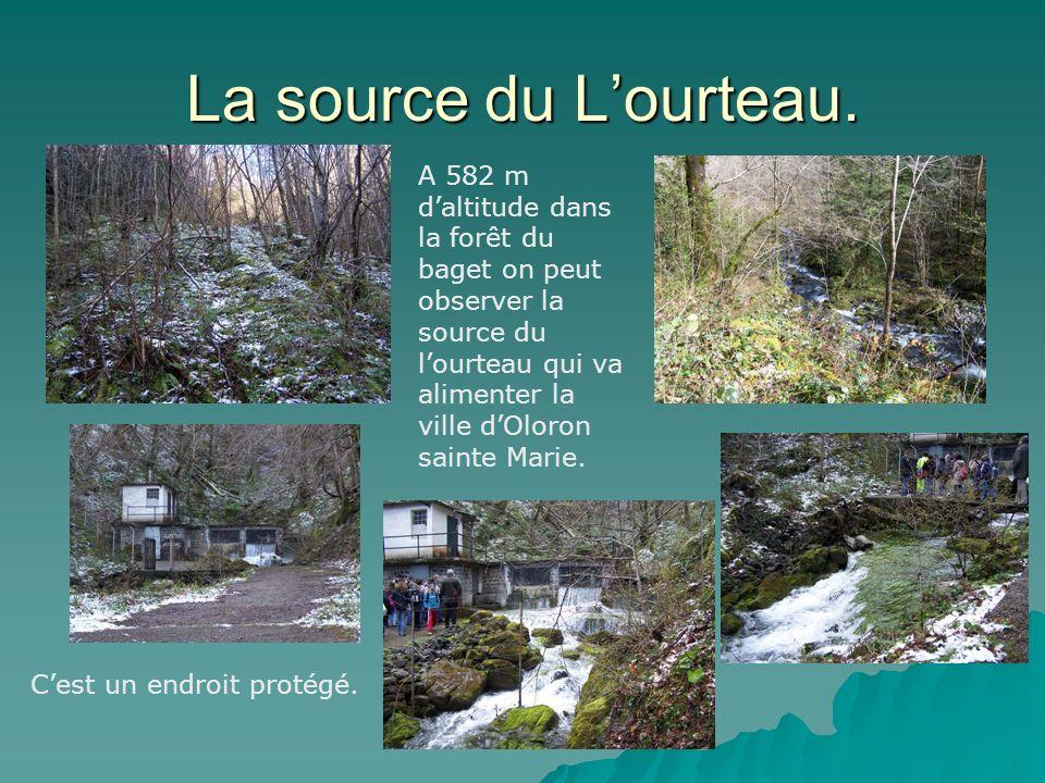 La source du L'ourteau.