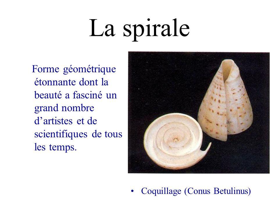 La spirale Forme géométrique étonnante dont la beauté a fasciné un grand nombre d'artistes et de scientifiques de tous les temps.