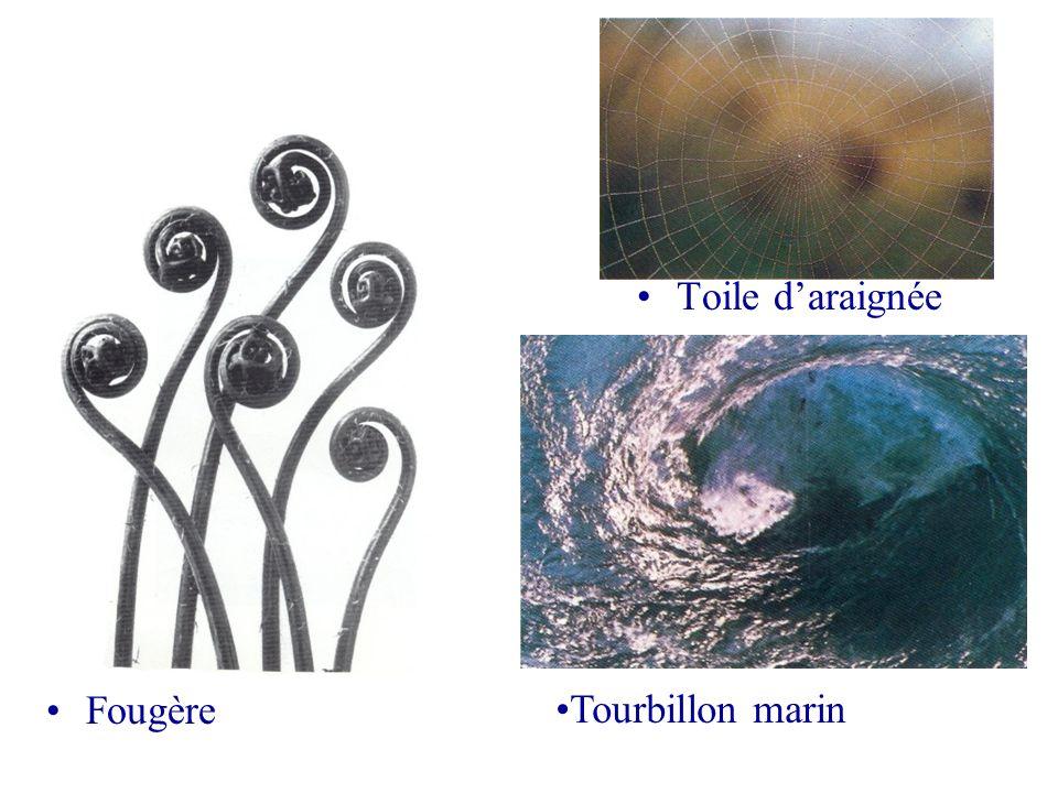 Toile d'araignée Fougère Tourbillon marin