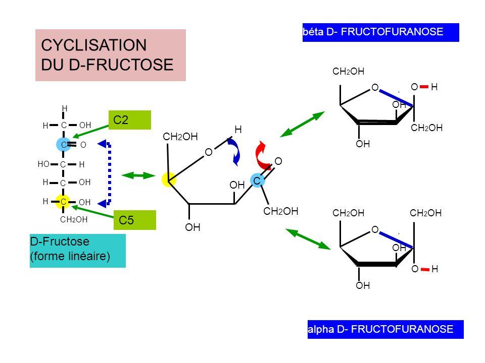 CYCLISATION DU D-FRUCTOSE C2 C5 D-Fructose (forme linéaire)