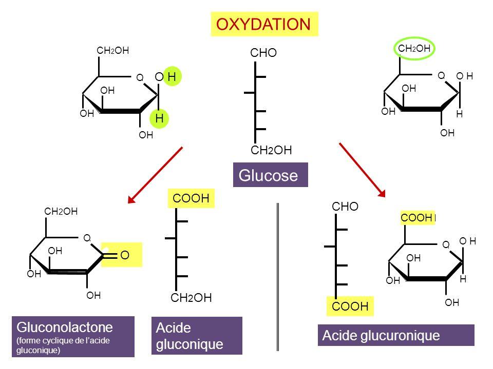 CH2OH COOH. Glucose. Acide. gluconique. OXYDATION. CHO. Acide glucuronique. OH. O. H. O H.