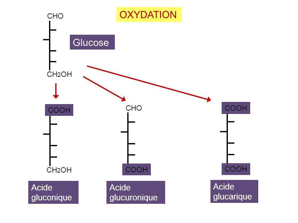 OXYDATION Glucose Acide Acide Acide gluconique glucarique glucuronique