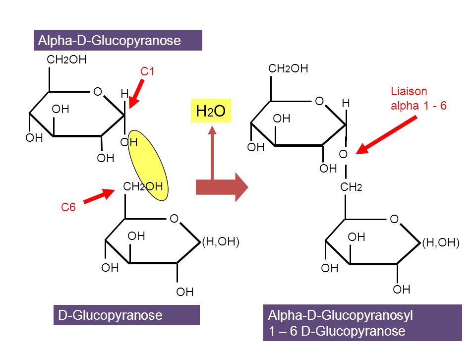 H2O Alpha-D-Glucopyranose D-Glucopyranose Alpha-D-Glucopyranosyl