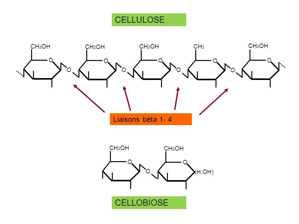 CELLULOSE O CH2OH CH2 Liaisons béta 1- 4 O (H,OH) CH2OH CELLOBIOSE