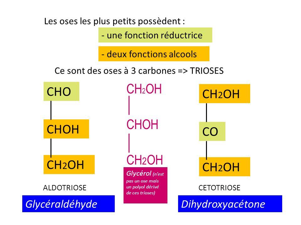 CHO CHOH CO CH2OH Glycéraldéhyde Dihydroxyacétone
