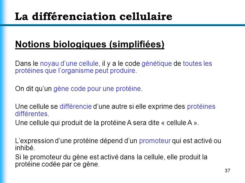La différenciation cellulaire