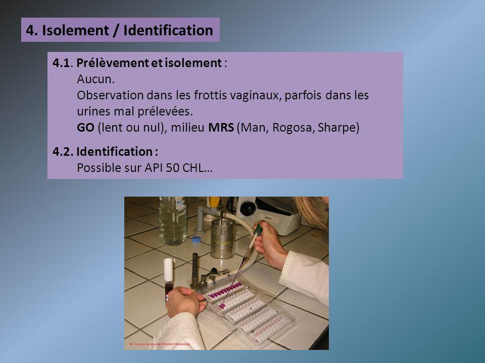 4. Isolement / Identification