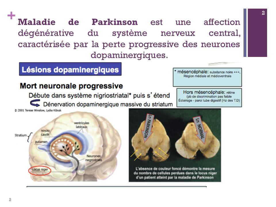 Maladie de Parkinson est une affection dégénérative du système nerveux central, caractérisée par la perte progressive des neurones dopaminergiques.