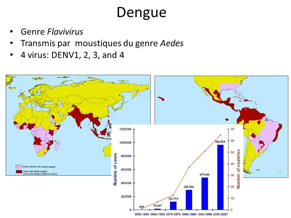 Dengue Genre Flavivirus Transmis par moustiques du genre Aedes