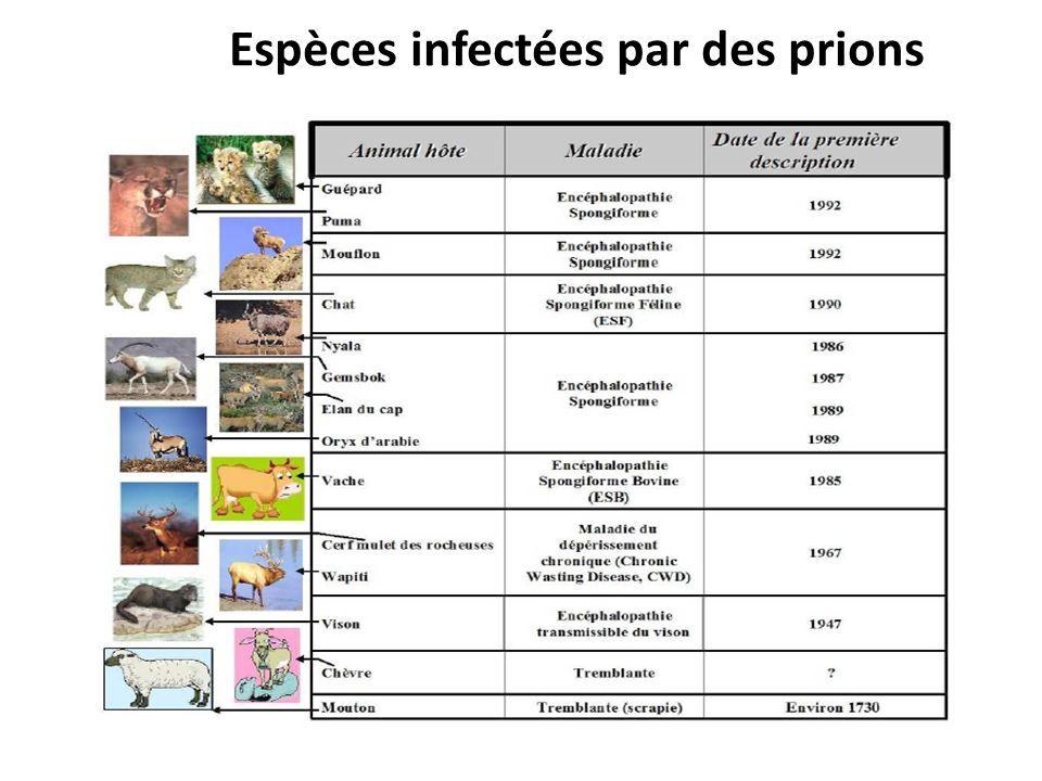 Espèces infectées par des prions