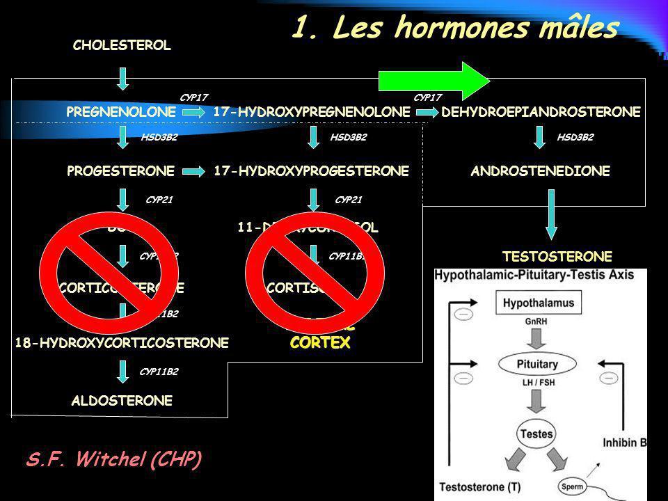 1. Les hormones mâles S.F. Witchel (CHP) ADRENAL CORTEX CHOLESTEROL