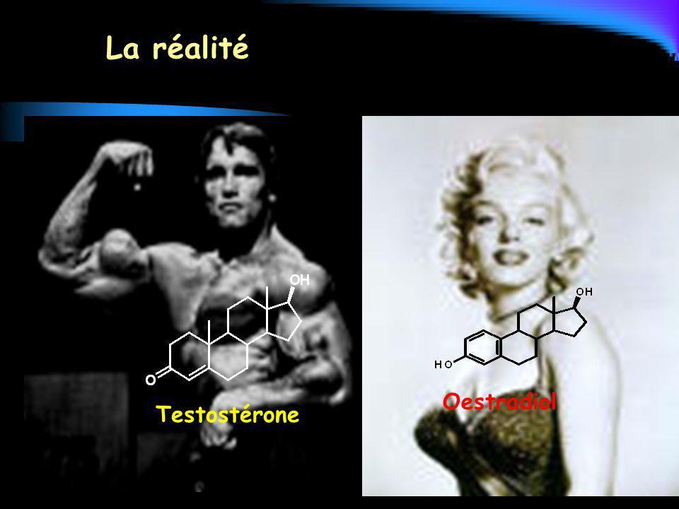La réalité Testostérone Oestradiol