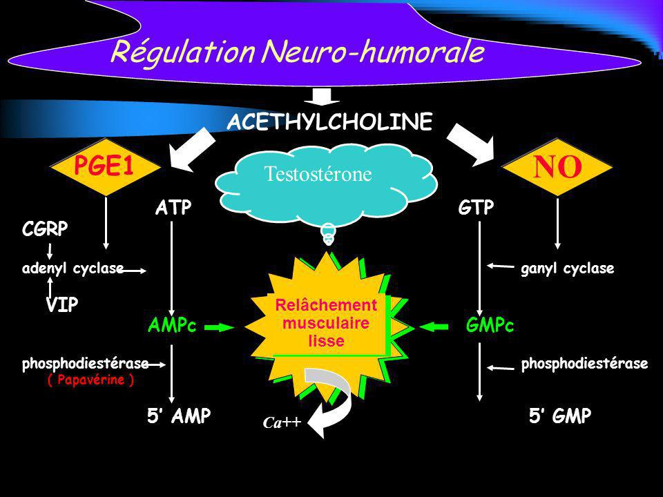 Régulation Neuro-humorale