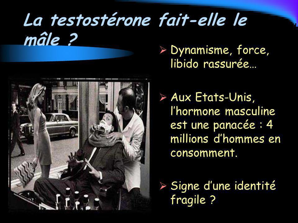 La testostérone fait-elle le mâle
