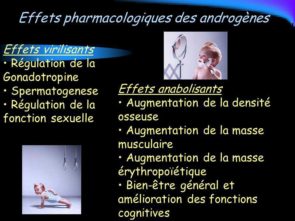Effets pharmacologiques des androgènes