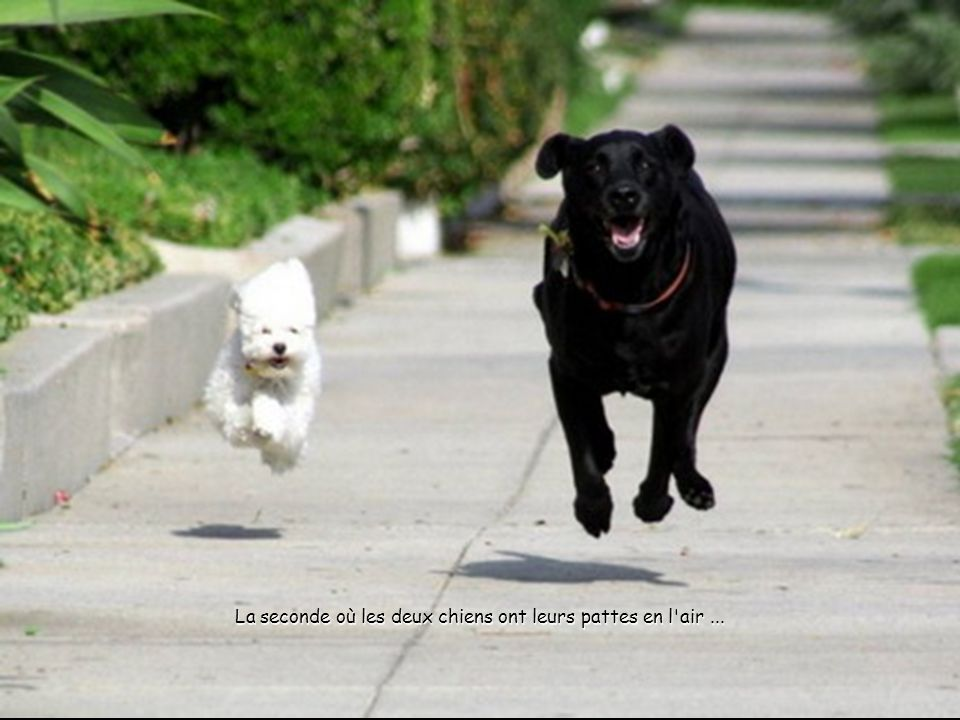La seconde où les deux chiens ont leurs pattes en l air ...