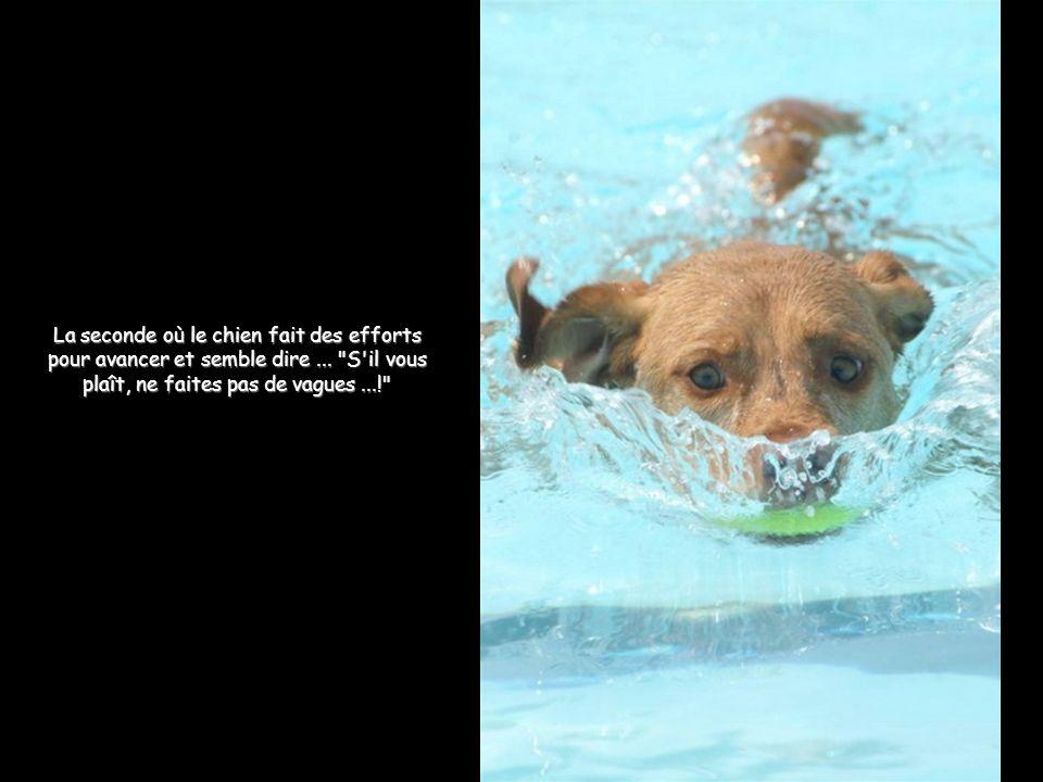 La seconde où le chien fait des efforts pour avancer et semble dire