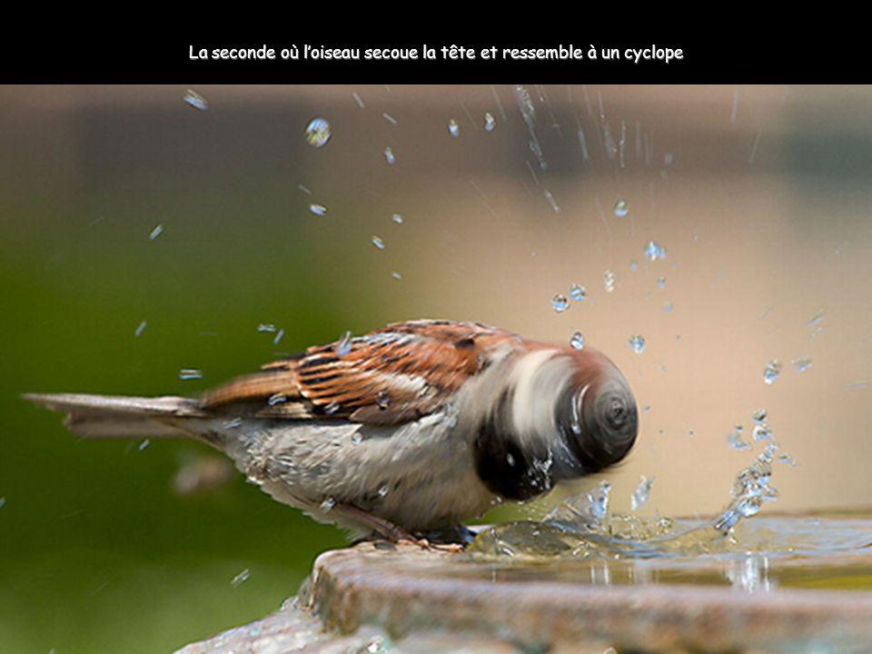 La seconde où l'oiseau secoue la tête et ressemble à un cyclope