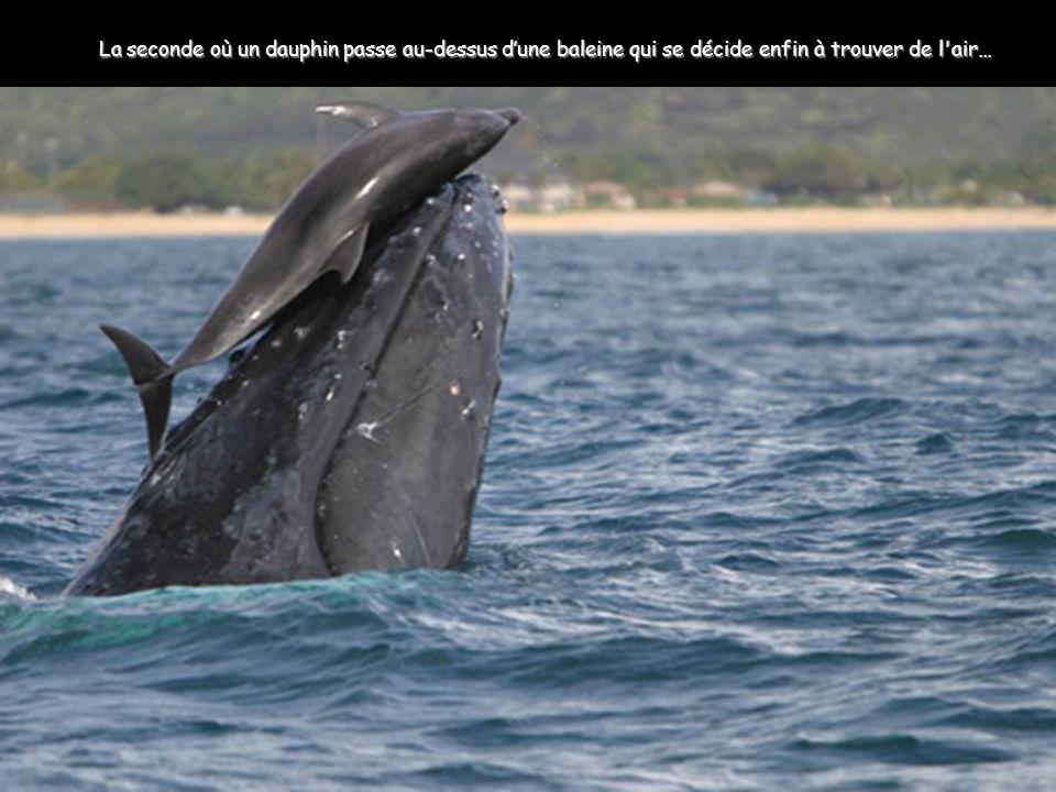 La seconde où un dauphin passe au-dessus d'une baleine qui se décide enfin à trouver de l air…