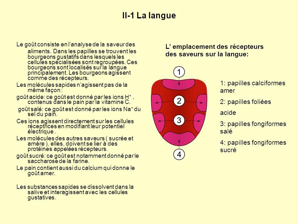 II-1 La langue