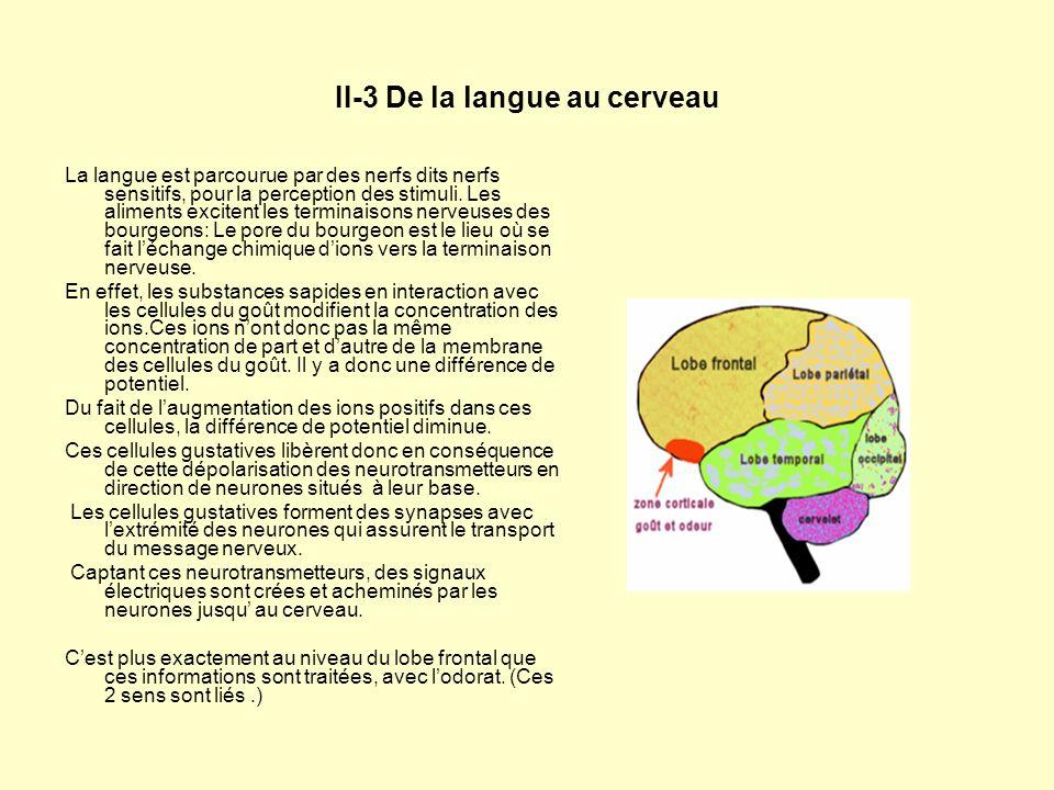 II-3 De la langue au cerveau
