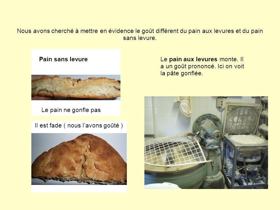 Nous avons cherché à mettre en évidence le goût différent du pain aux levures et du pain sans levure.