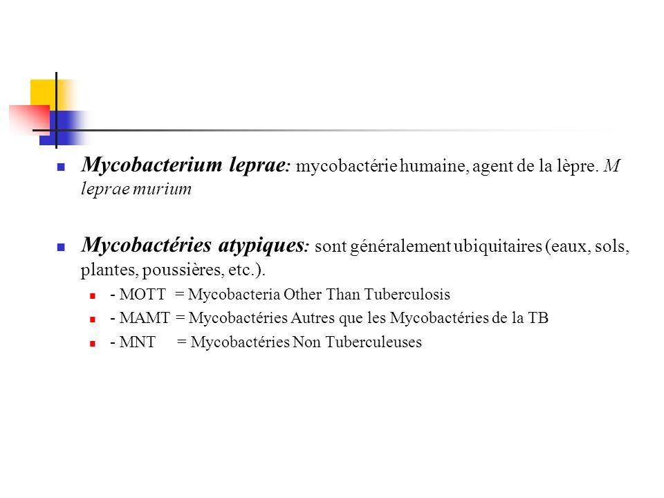Mycobacterium leprae: mycobactérie humaine, agent de la lèpre