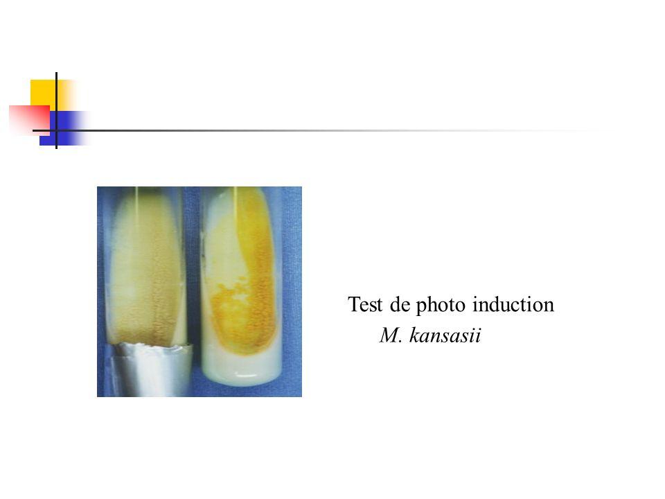 Test de photo induction