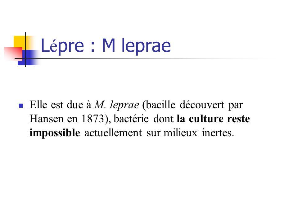 Lépre : M leprae