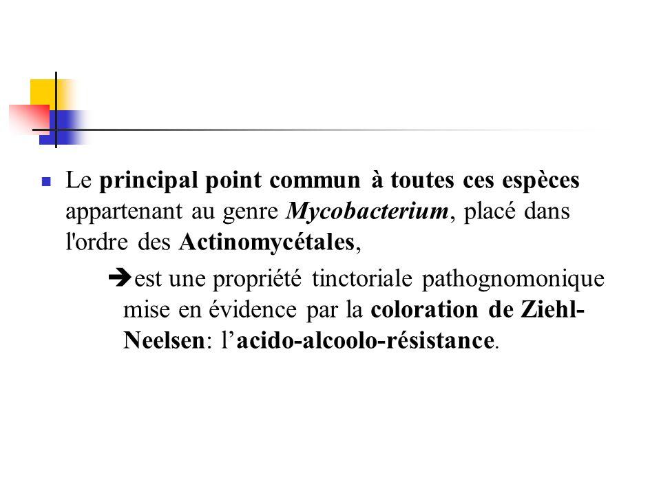 Le principal point commun à toutes ces espèces appartenant au genre Mycobacterium, placé dans l ordre des Actinomycétales,