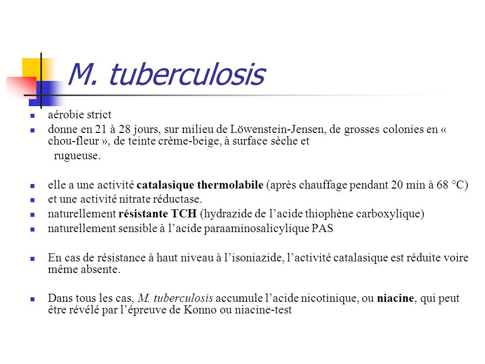 M. tuberculosis aérobie strict
