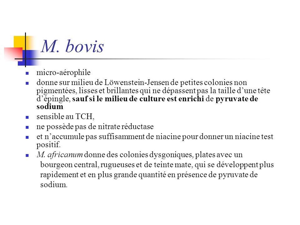 M. bovis micro-aérophile