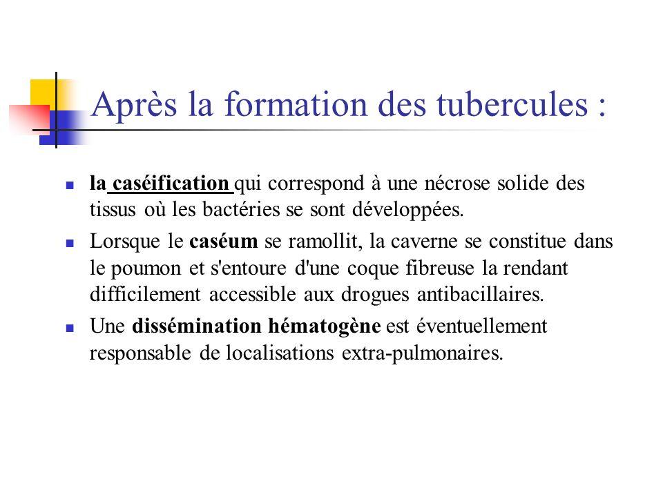 Après la formation des tubercules :