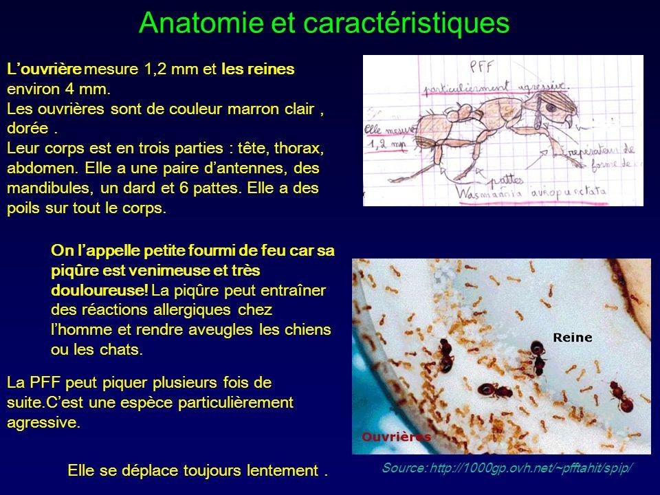 Anatomie et caractéristiques