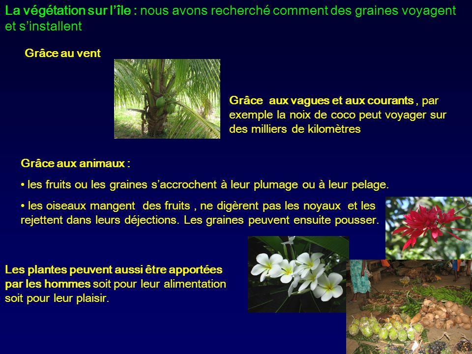 La végétation sur l'île : nous avons recherché comment des graines voyagent et s'installent