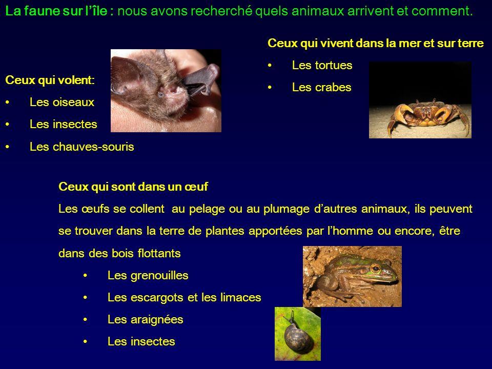 La faune sur l'île : nous avons recherché quels animaux arrivent et comment.