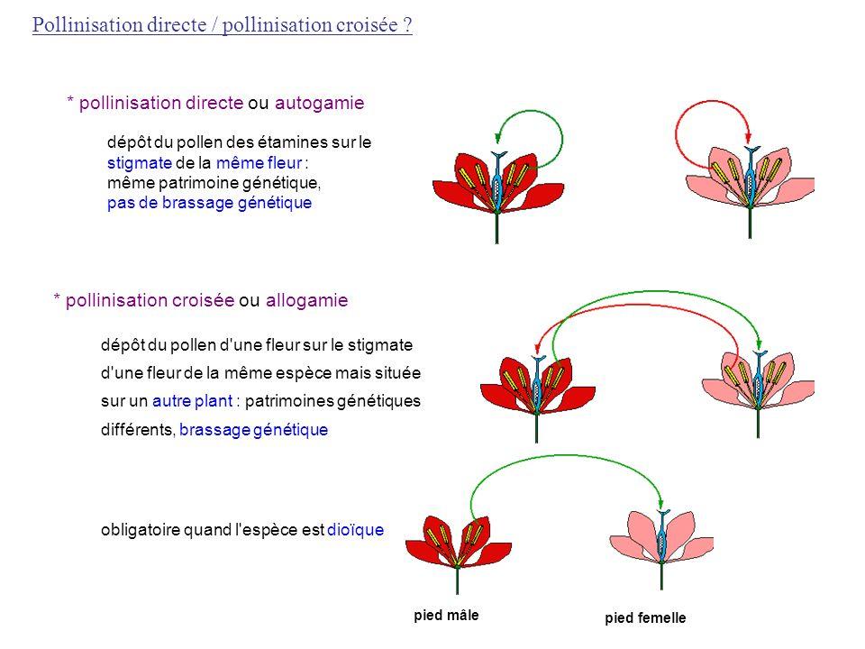 Pollinisation directe / pollinisation croisée