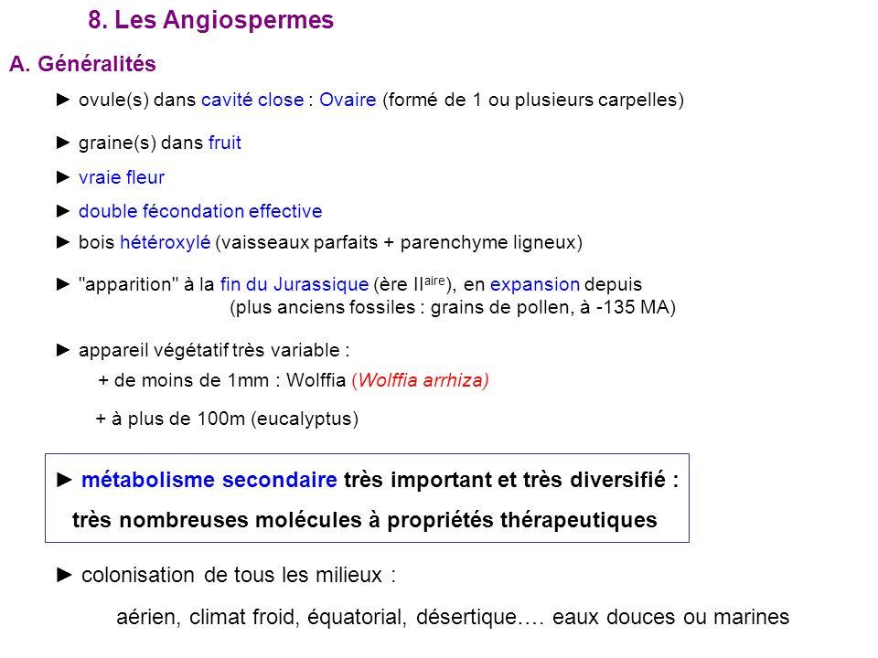 8. Les Angiospermes A. Généralités