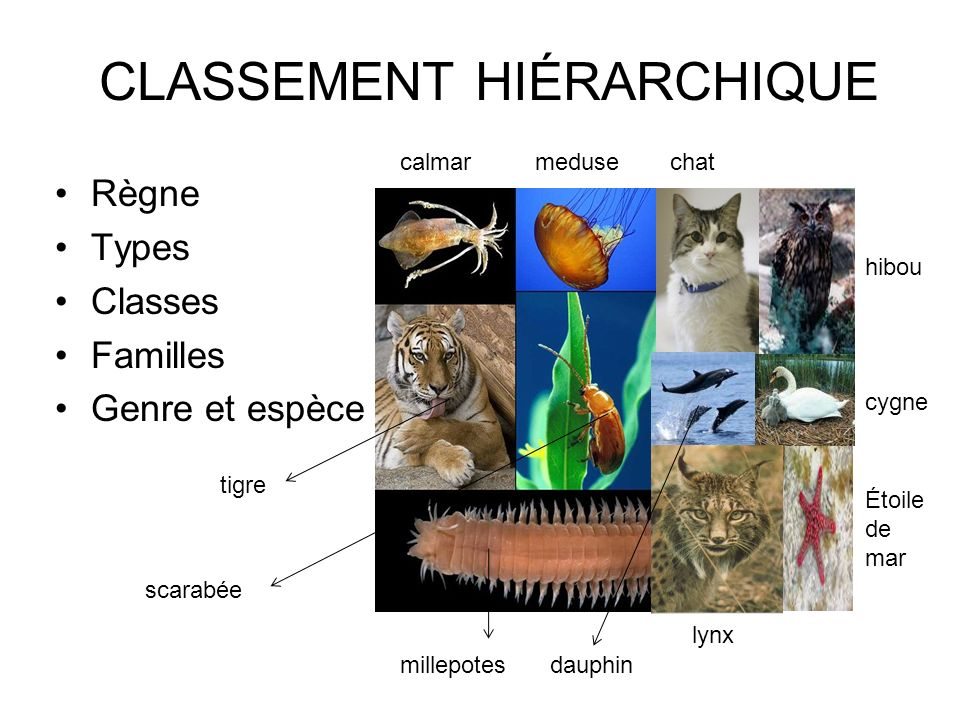 CLASSEMENT HIÉRARCHIQUE