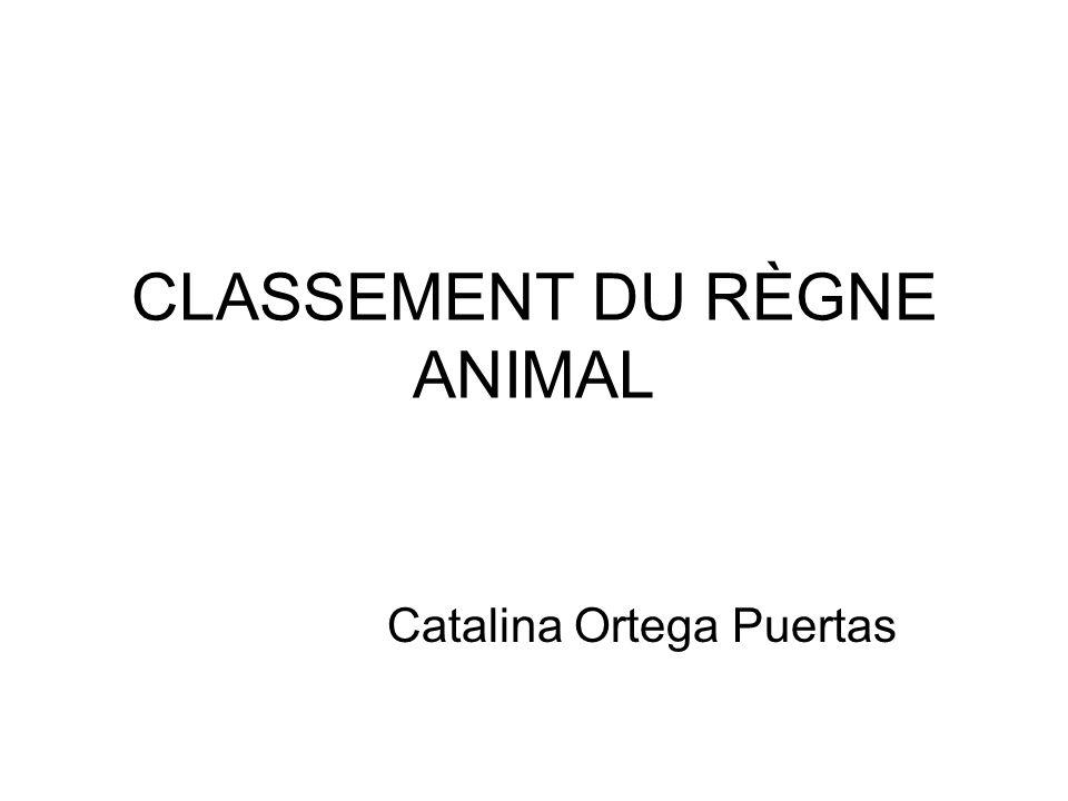 CLASSEMENT DU RÈGNE ANIMAL