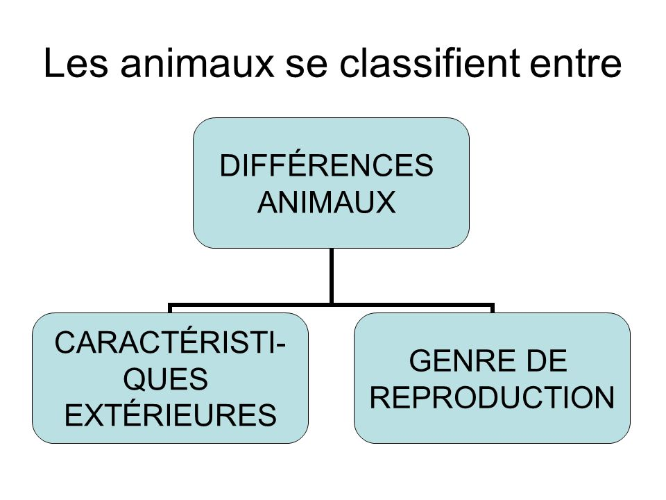 Les animaux se classifient entre