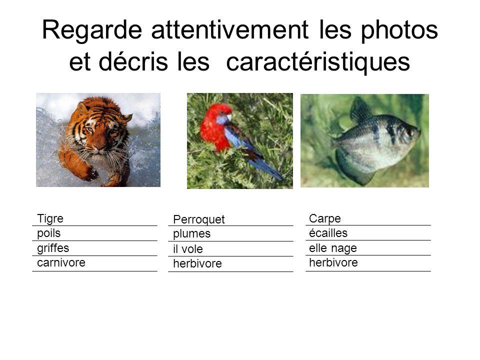 Regarde attentivement les photos et décris les caractéristiques