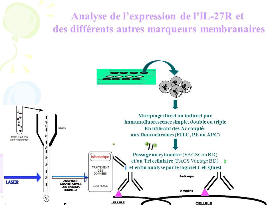 Analyse de l'expression de l'IL-27R et