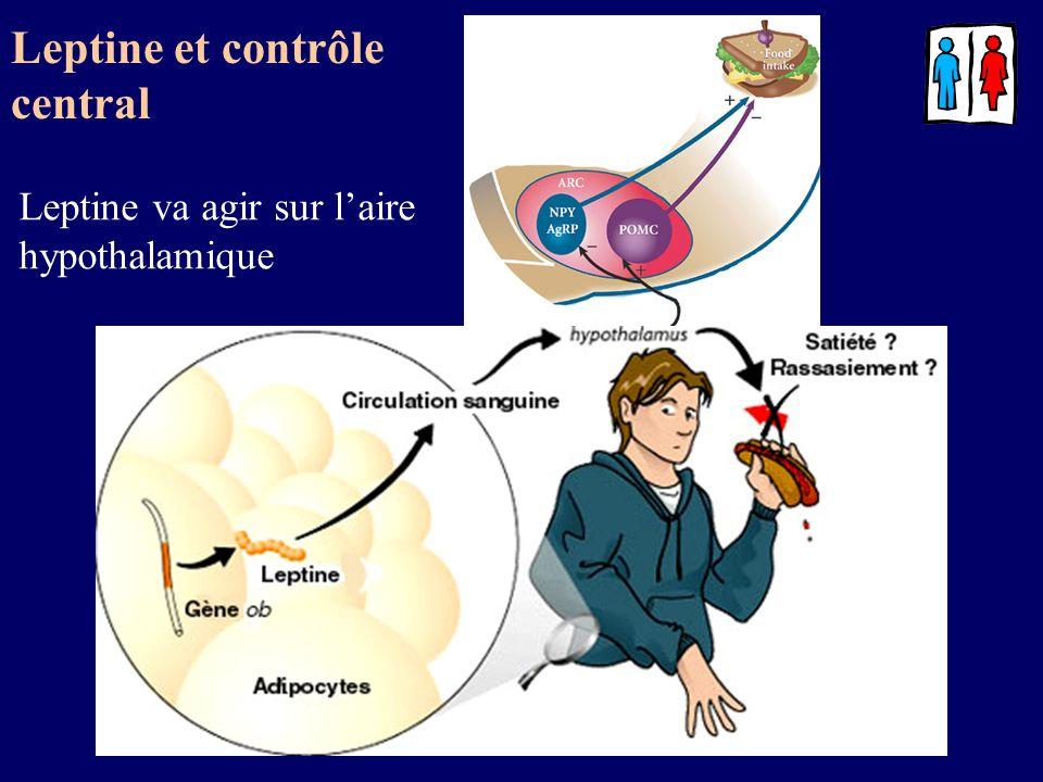 Leptine et contrôle central