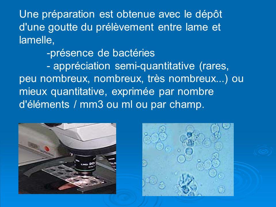 Une préparation est obtenue avec le dépôt d une goutte du prélèvement entre lame et lamelle,