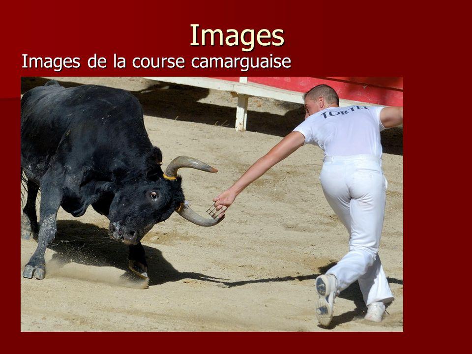Images Images de la course camarguaise